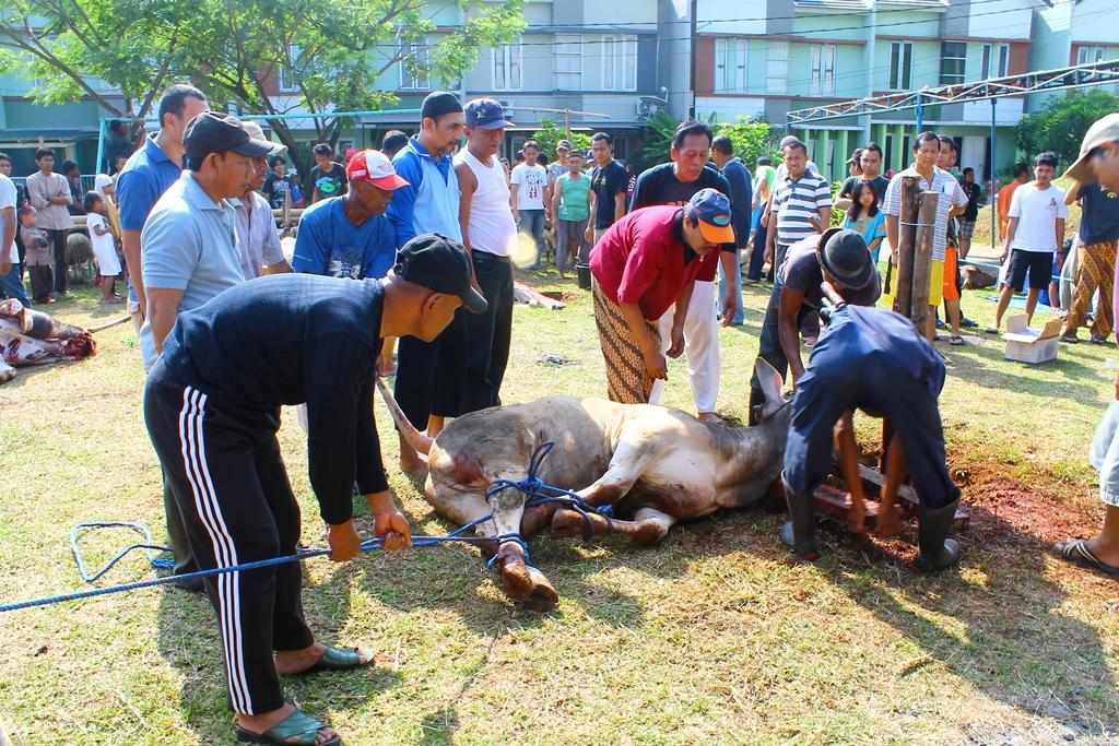 Bapak-bapak sedang melakukan eksekusi hewan qurban